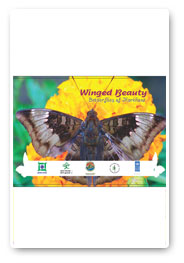 wingned-beauty